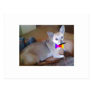 Mustache bowtie Chihuahua Postcards