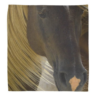 Mustang Horse Do-rags