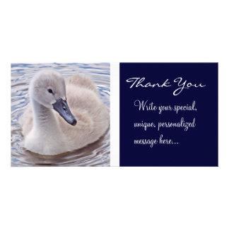 Mute Swan Cygnet (Thank You) Custom Photo Card