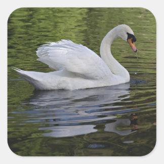 Mute Swan (Cygnus olor) Louisville, Kentucky 2 Square Sticker