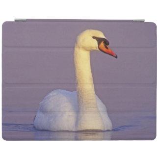 Mute Swan, Cygnus olor,male, Unterlunkhofen, iPad Cover