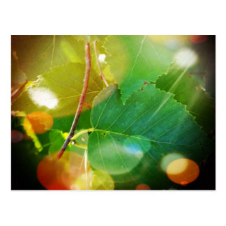 Mystical Leaves in Boothbay Maine Postcard
