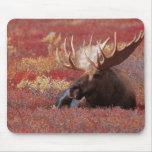 N.A., USA, Alaska, Denali National Park, Bull Mousepad