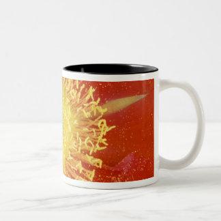 N.A., USA, Arizona, Casa Grande, NM, Desert Two-Tone Coffee Mug