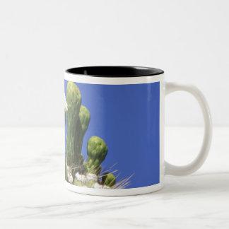 N.A., USA, Arizona, Tucson, Sonora Desert 2 Two-Tone Coffee Mug