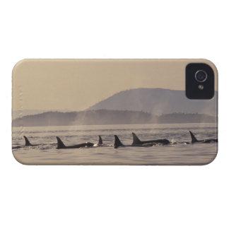 N.A., USA, Washington, San Juan Islands Orca iPhone 4 Case