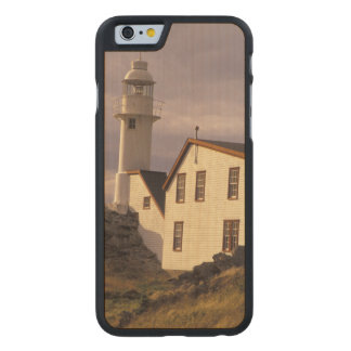 NA, Canada, Newfoundland, Lobster Cove. Lobster Carved Maple iPhone 6 Case