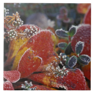 NA, USA, Alaska, Denali NP Frosted, fall-colored Tile