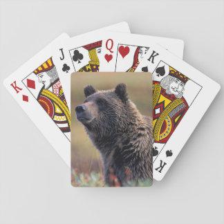 NA, USA, Alaska, Denali NP, Grizzly bear Playing Cards