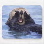 NA, USA, Alaska. Sea otters are the largest Mousemat