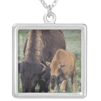NA, USA, Wyoming, Yellowstone National Park. Silver Plated Necklace