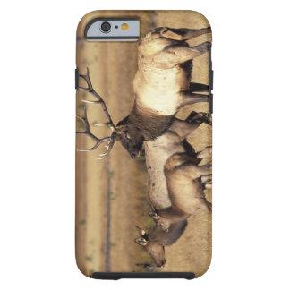 NA, USA, Wyoming, Yellowstone National Park. Tough iPhone 6 Case