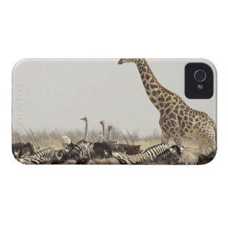 Namibia, Etosha National Park. A lone giraffe iPhone 4 Cases