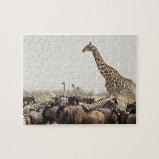 Namibia, Etosha National Park. A lone giraffe Jigsaw Puzzle