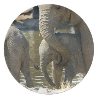 Namibia, Ongava Camp and Etosha National Park, Plate