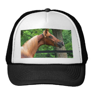 National Show Horse Mesh Hats