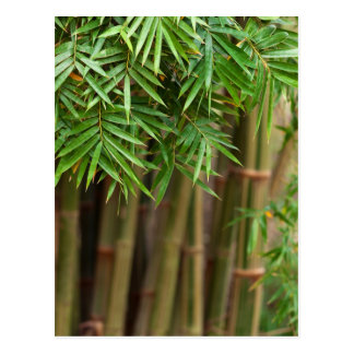 Natural Bamboo Zen Background Customised Template Postcard