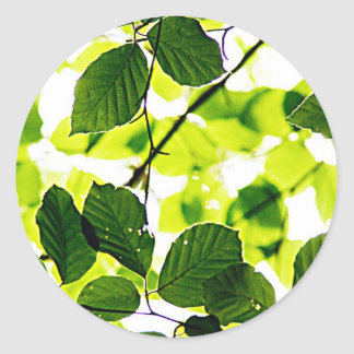 natural  Green leaf leaves Trees Earth Beautiful D Round Stickers