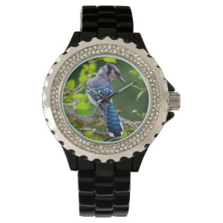 Nature Photography Shy Blue Jay Designer Watch