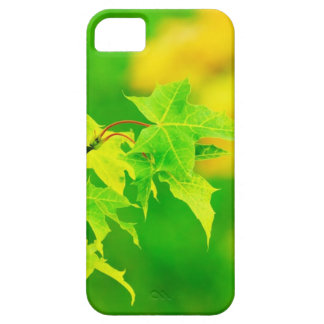 Nature Photography: Tender Green Maple Leaves iPhone 5 Cases