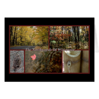 Nature Postcard Northwoods Wisconsin Seasonal