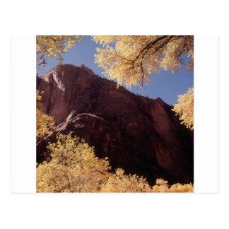 Nature Trees Autumn Rock Postcard