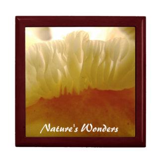 Nature's Wonders Mushroom Gift Box
