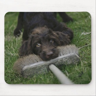 Naughty Labradoodle Mouse Pad