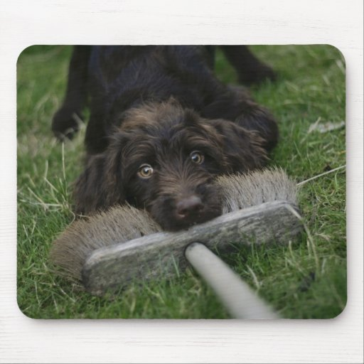 Naughty Labradoodle Mousemat