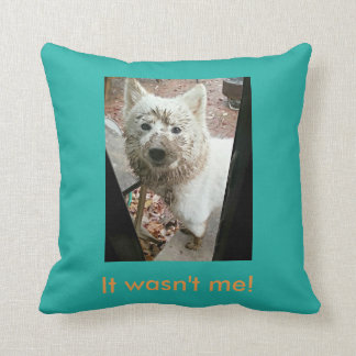 Naughty Samoyed Dog: I didn't do it! Cushion