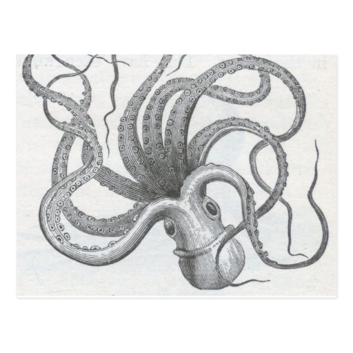Nautical steampunk octopus vintage kraken design postcards