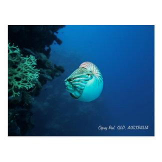 Nautilus Great Barrier Reef Coral Sea Postcard