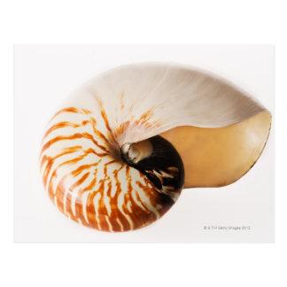 Nautilus seashell (Nautilus stenomphalus) Postcard
