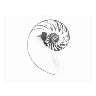 Nautilus shell 1 postcard