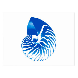 Nautilus shell - cobalt blue and white postcard