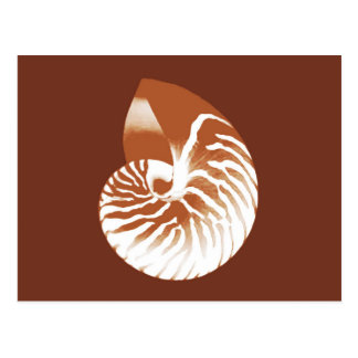Nautilus shell - cocoa brown and white postcard