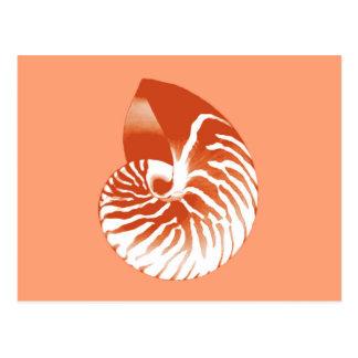 Nautilus shell - terracotta and white postcard