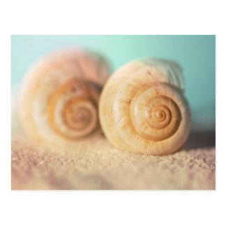 Nautilus Shells On Beach Postcard
