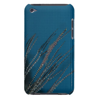 Needle shrimp (Tozeuma armatum) underwater Barely There iPod Case