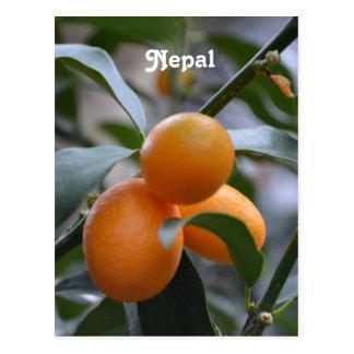 Nepal Kumquats Post Cards