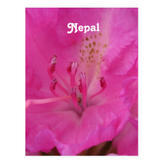 Nepal Rhododendron Post Card