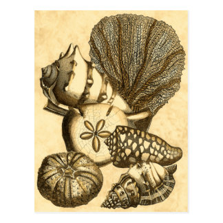 Neutral Shells and Coral Collection Postcard