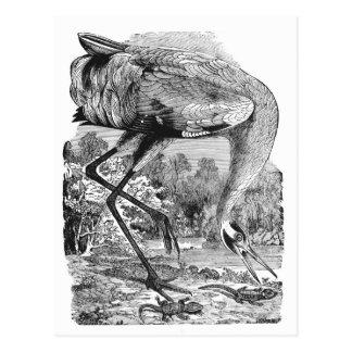 New Address | Vintage Bird  | BW | Whooping Crane Postcard
