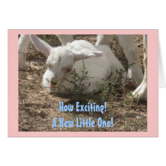 New Baby Congratulations - Baby Animal - Western Card