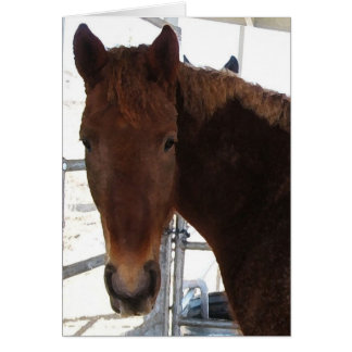 New Baby - Tennessee Walking Horse - Western Card