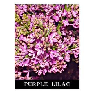 New Hampshire Lilac (Purple) Postcard