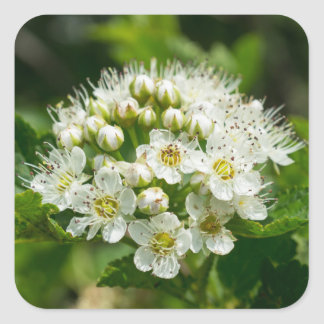 Ninebark White Wildflower Floral Square Stickers