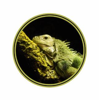 Noble Iguana Photo Sculpture