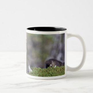 North America, Canada, Manitoba, Churchill. Two-Tone Coffee Mug