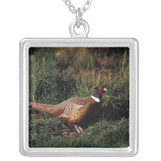 North America, Canada, Nova Scotia, Eastern Silver Plated Necklace